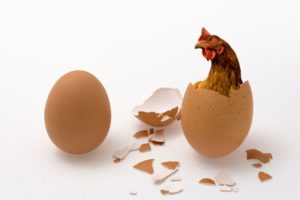 Which-came-first-the-chicken-or-the-egg-300x200.jpg